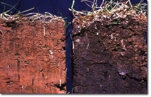soil_carbon_comparison