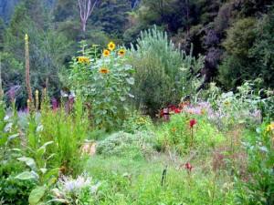 Permaculture-Garden