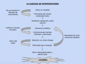 Fuente: http://somosmamiferas.blogspot.com.es/2015/01/la-cascada-de-interveciones.html