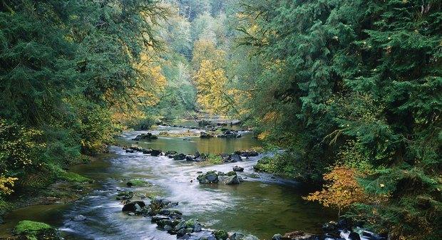 Los bosques de ribera se componen de diversas frondosas: alisos, fresnos, sauces álamos, etc.